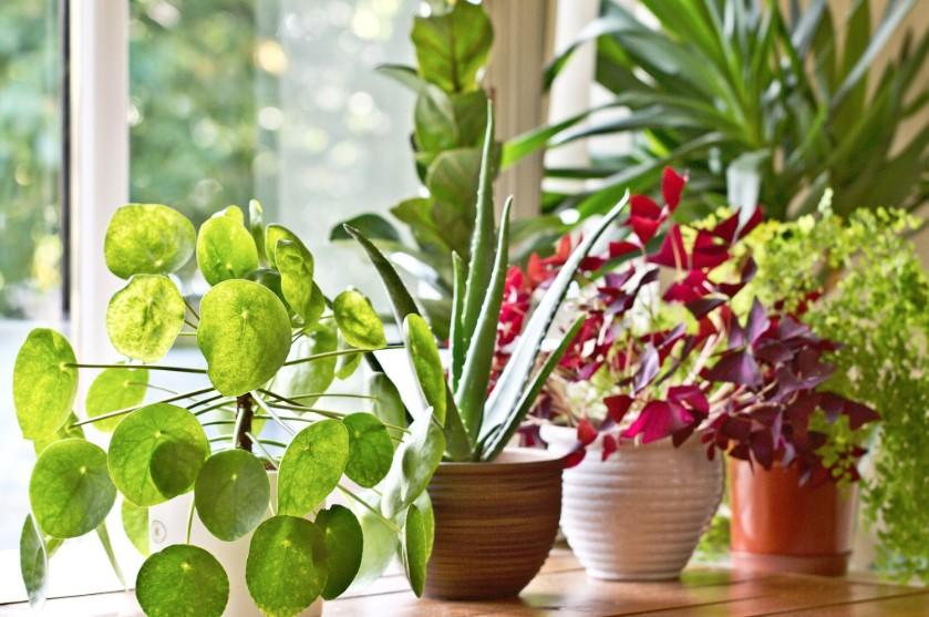 Lonely Millennials Are Becoming Friends With Houseplants