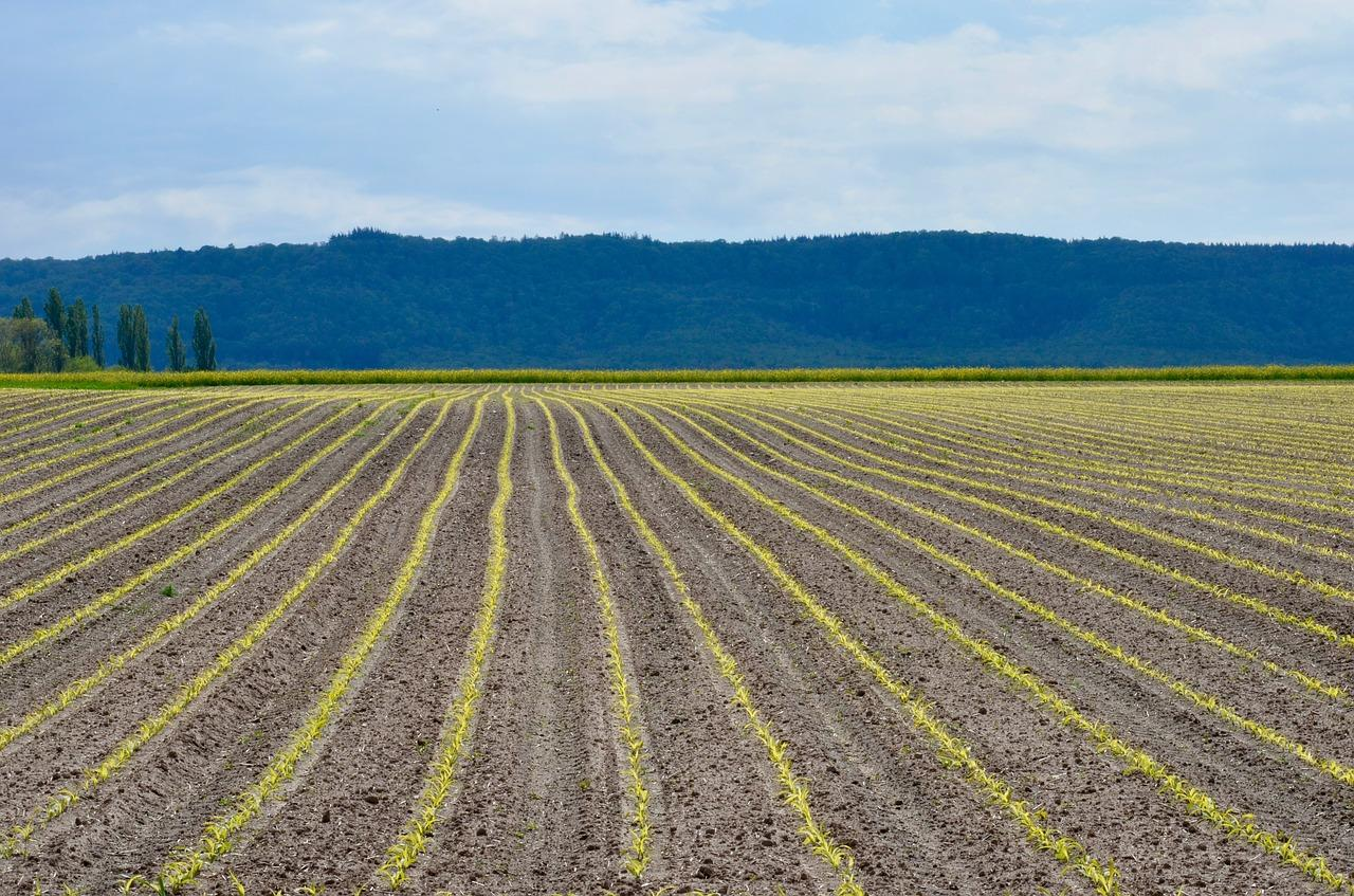 """It's A Disaster Like I've Never Seen Before"": 2019 Could Be Worst Year Ever For US Corn Farmers"